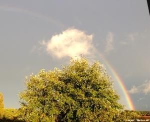 Oscar sends us rainbows.