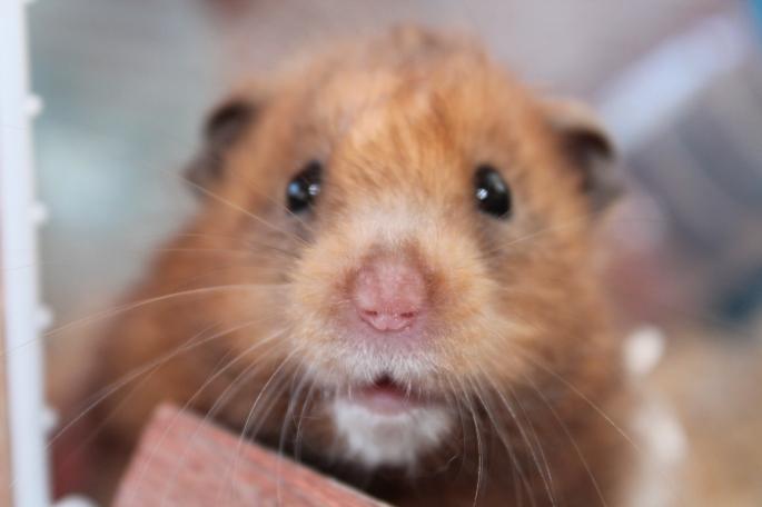 Tildy Mouse