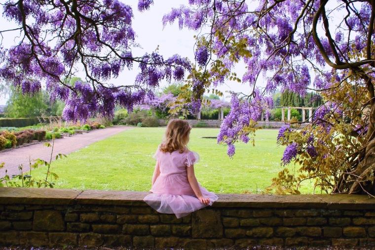 wisteria 1.jpeg